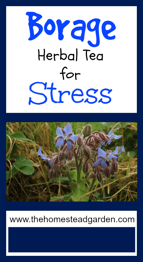 Borage herbal tea for stress the homestead garden the
