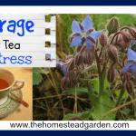 Borage Herbal Tea for Stress