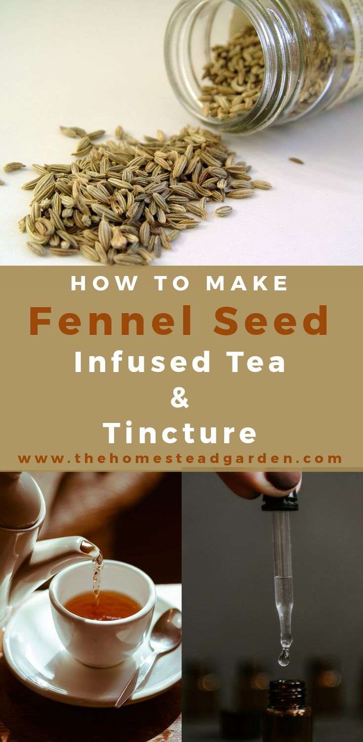 How to Make Fennel Seed Infused Tea and Fennel Seed Tincture