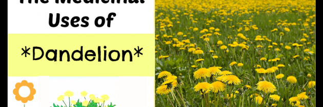 Medicinal Uses of Dandelion