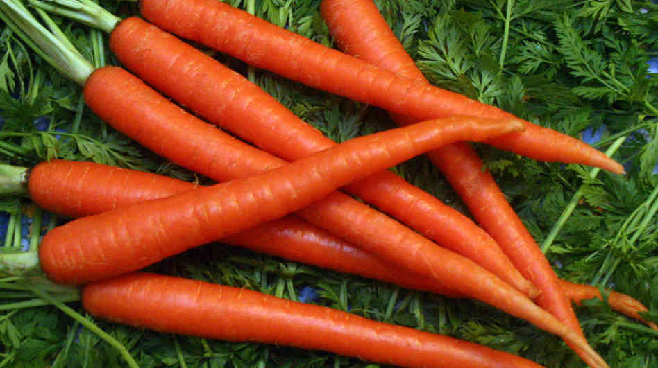 How To Grow Carrots The Homestead Garden