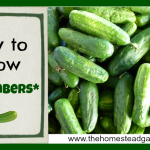 How to Grow Cucumbers