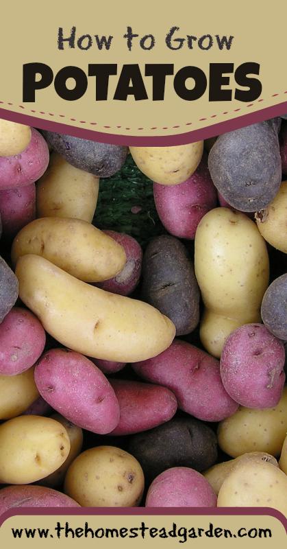 potatoepin