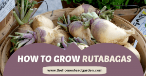 How to Grow Rutabagas
