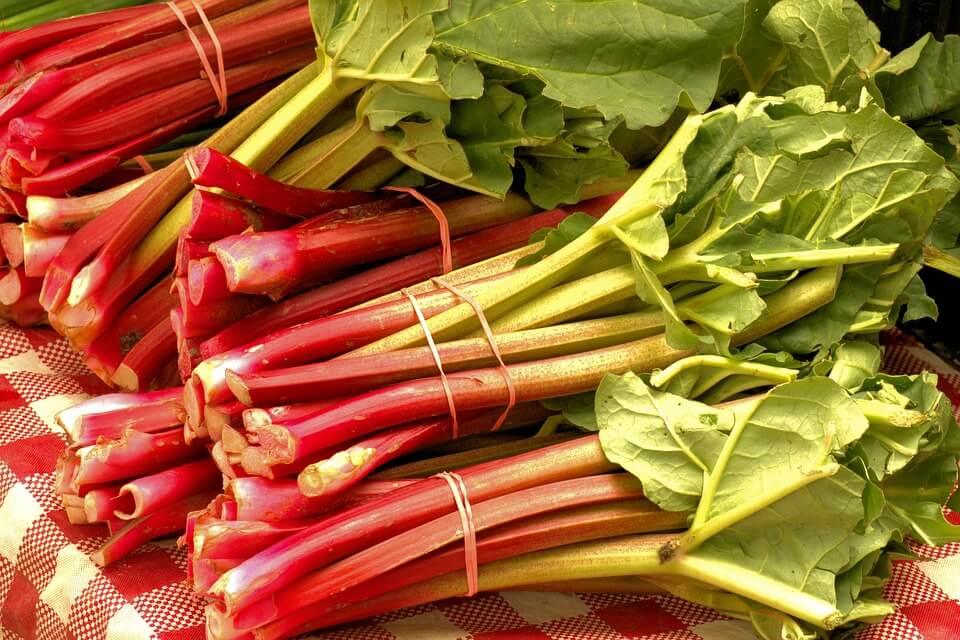 How to Grow Rhubarb: Rhubarb all cut up