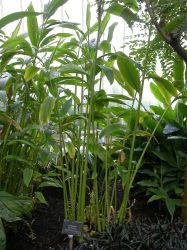 The Spice Series Cardamom The Homestead Garden