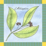 The Spice Series: Allspice