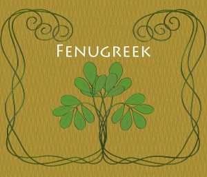 The Spice Series: Fenugreek