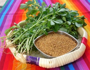 fenugreek leaves and seeds