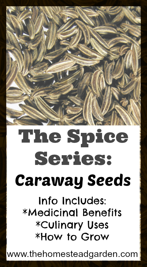 Everything You Need to Know About Caraway Seeds