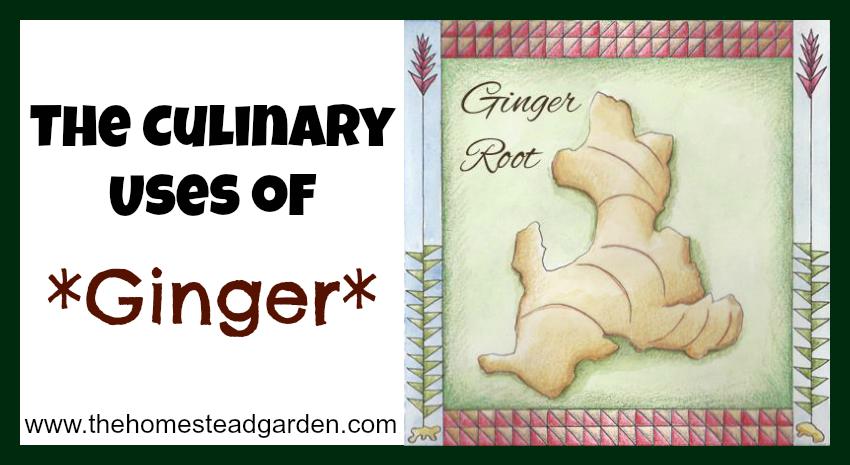 culinaryusesofginger
