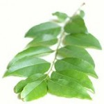 The Spice Series: Curry Leaf: Medicinal Benefits