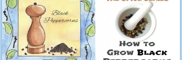 How to Grow Black Peppercorns