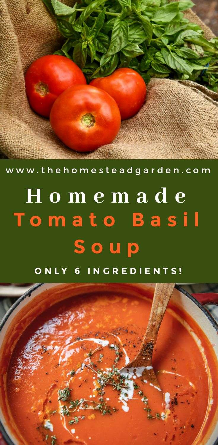 Homemade Tomato Basil Soup Recipe (Only 6 Ingredients)