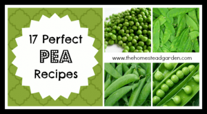 17 Perfect Pea Recipes