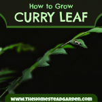 How to Grow Curry Leaf