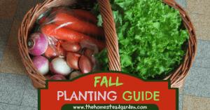 Fall Gardening Planting Guide