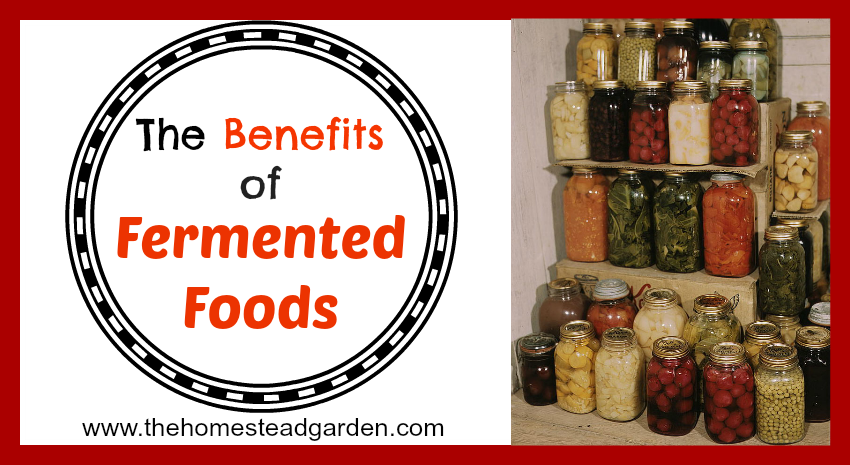 Fermented Foods Facebook