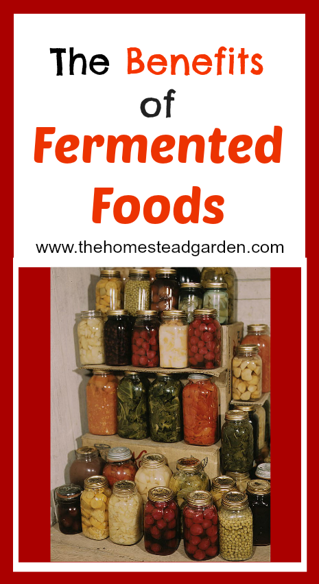 Fermented Foods Recipe Book