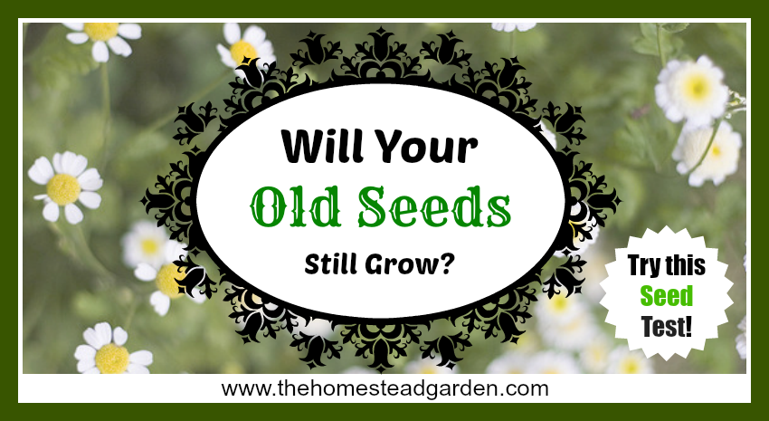 Will Your Old Seeds Still Grow