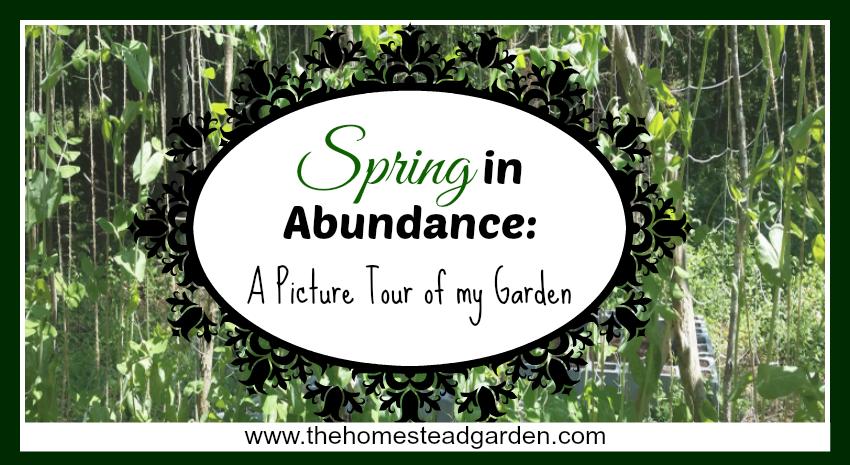 Spring in Abundance fb