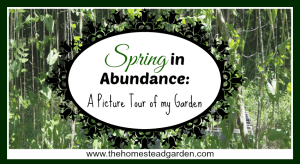 Spring in Abundance: A Picture Tour of My Garden