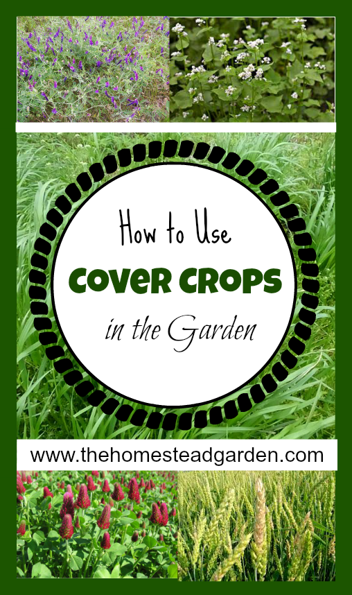 Cover Crops in the Garden The Homestead Garden The Homestead