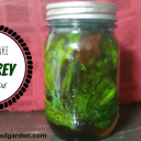 How to Make Comfrey Infused Oil