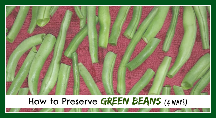 How to Preserve Green Beans (4 ways)