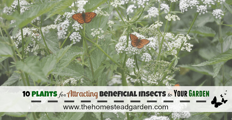 10 Plants for Attracting Beneficial Insects to Your Garden