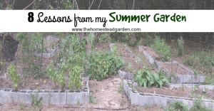 Lessons from my Summer Garden