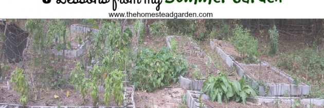8 Lessons from My Summer Garden
