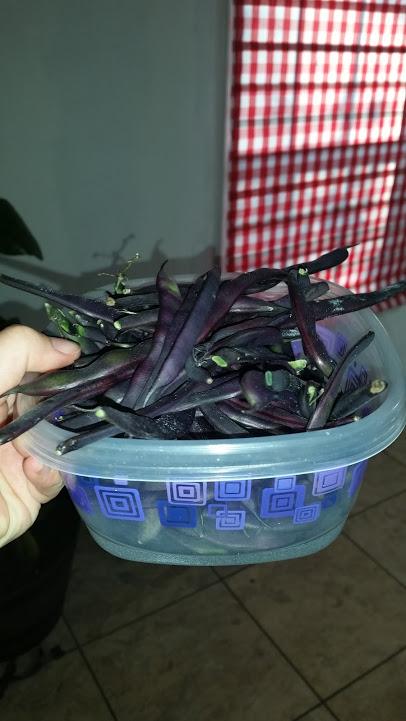 purplebeans
