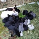 8 Reasons Why I am Raising Meat Rabbits