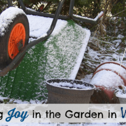 Finding Joy in the Garden in Winter