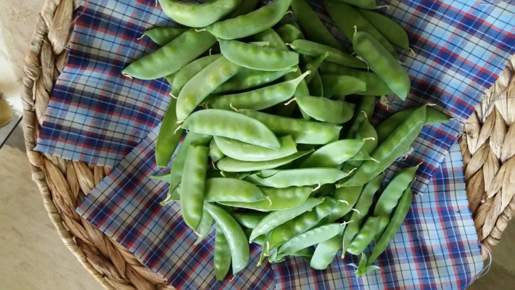 Early Spring Peas