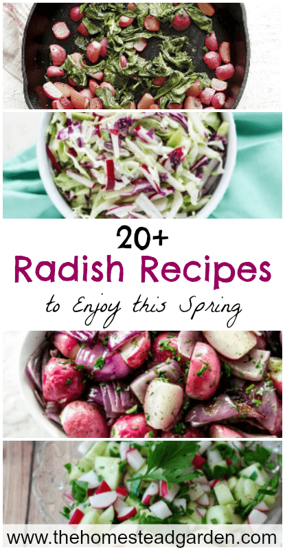 20+ Radish Recipes to Enjoy This Spring