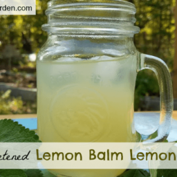 Honey-Sweetened Lemon Balm Lemonade Recipe