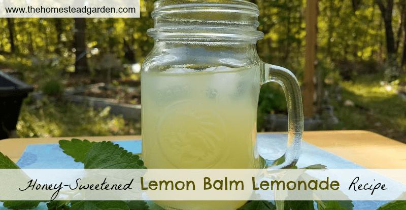 Honey-Sweetened Lemon Balm Lemonade Recipe