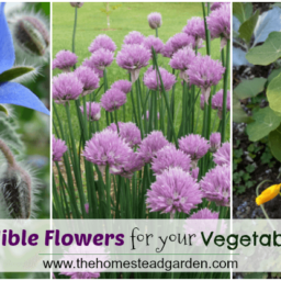 The Best Edible Flowers for Your Vegetable Garden