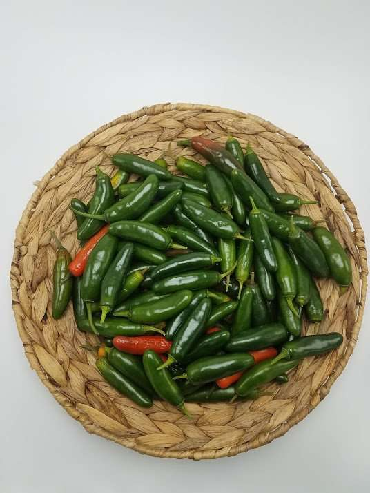 Huge Basket of Serrano Peppers for my Quick Pickled Jalapenos Recipe