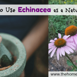 13+ Ways to Use Echinacea as a Natural Remedy fb