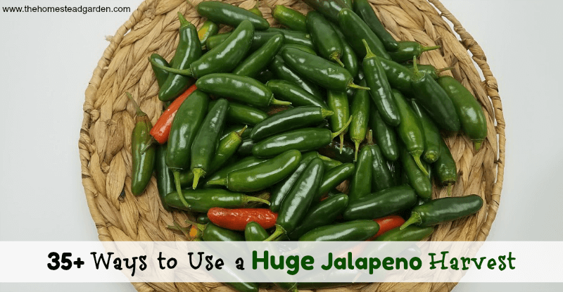 35+ Ways to Use a Huge Jalapeno Harvest