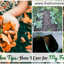 Fall Garden Tips: How I Care for My Fall Garden