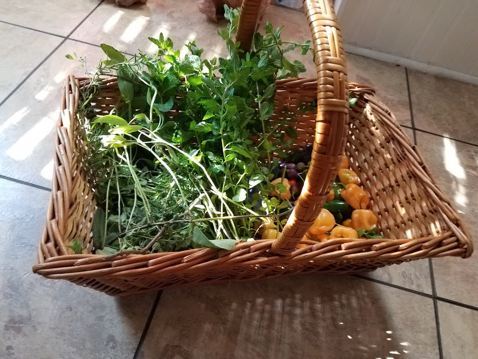 Fall Garden Tips: Fall Garden Harvest in a Basket