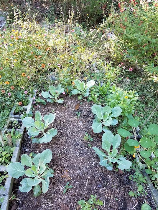 Fall Garden Tips: Fall Garden