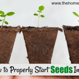 How to Start Seeds Inside