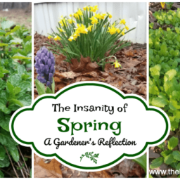 The Insanity of Spring: A Gardener's Reflection fb