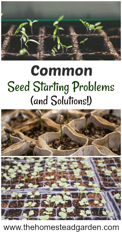 Common Seed Starting Problems and Solutions