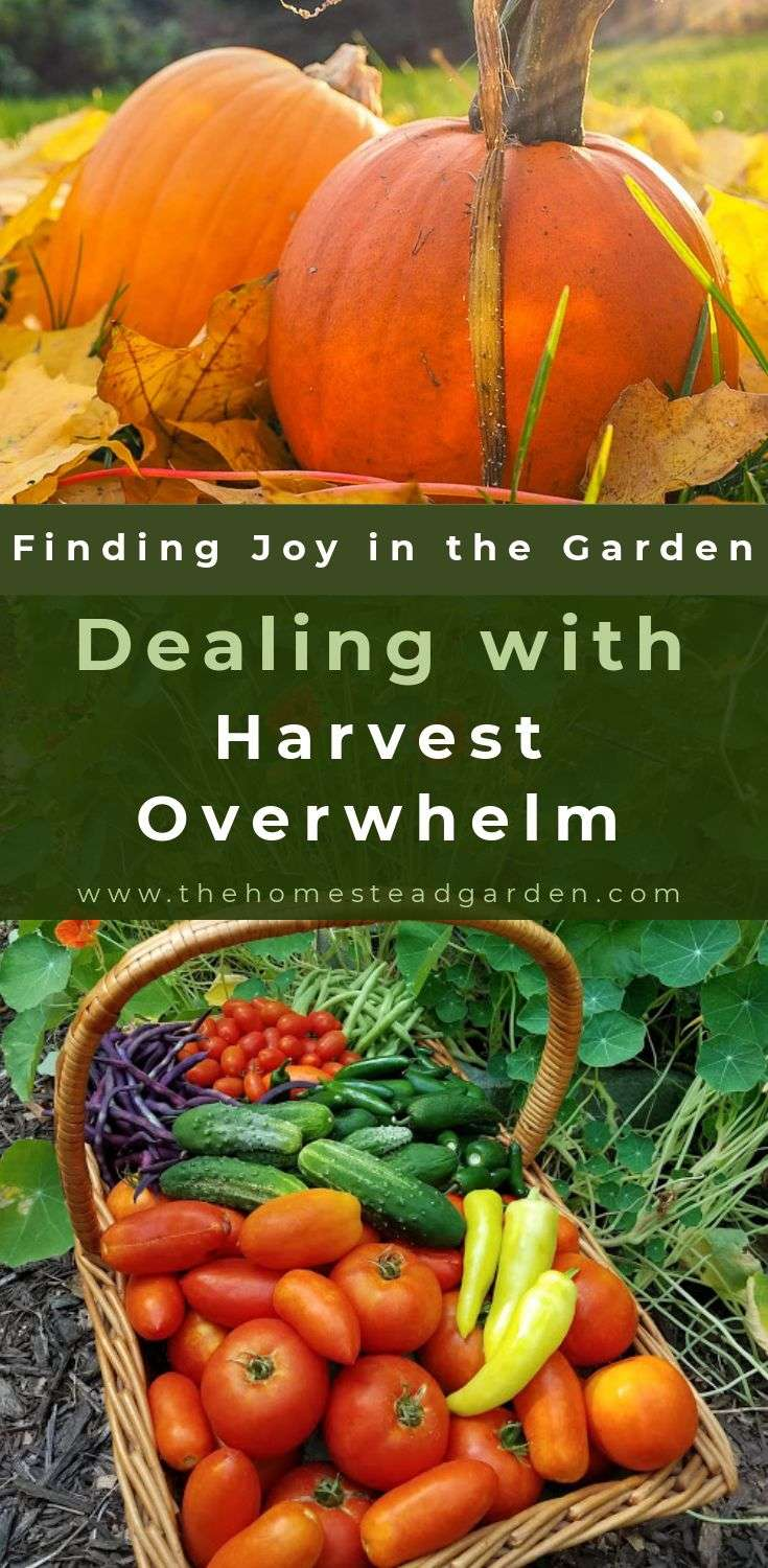 Finding Joy in the Garden in Fall Dealing with Harvest Overwhelm